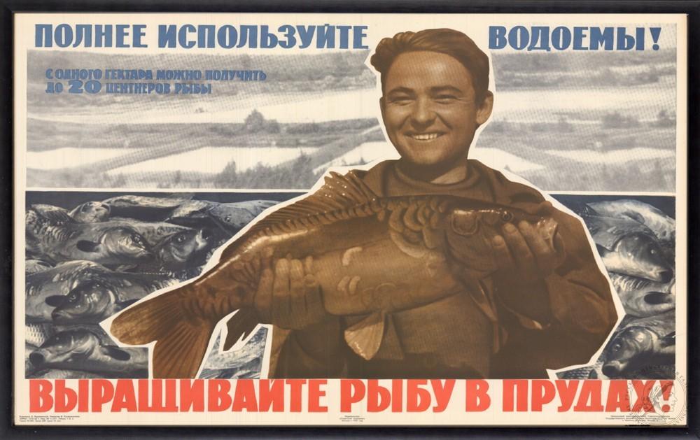 Плакат «Выращивайте рыбу в прудах!»